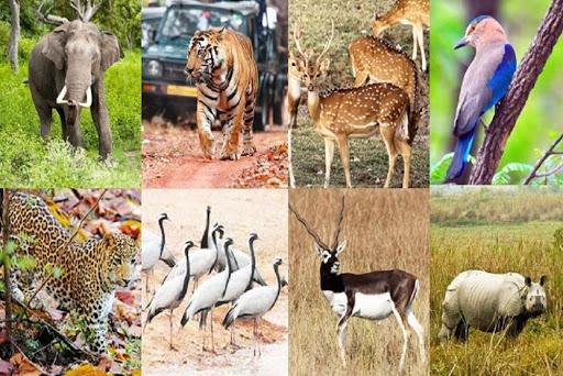 जयपुर चिड़ियाघर के बारे में About Jaipur Zoo