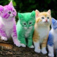 Amazing facts about cats in hindi – बिल्लियों से जुड़े रोचक तथ्य
