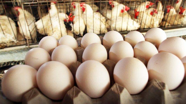 अंडा खाने के फायदे और नुकसान Ande Khane Ke Fayde or Nuksan in Hindi