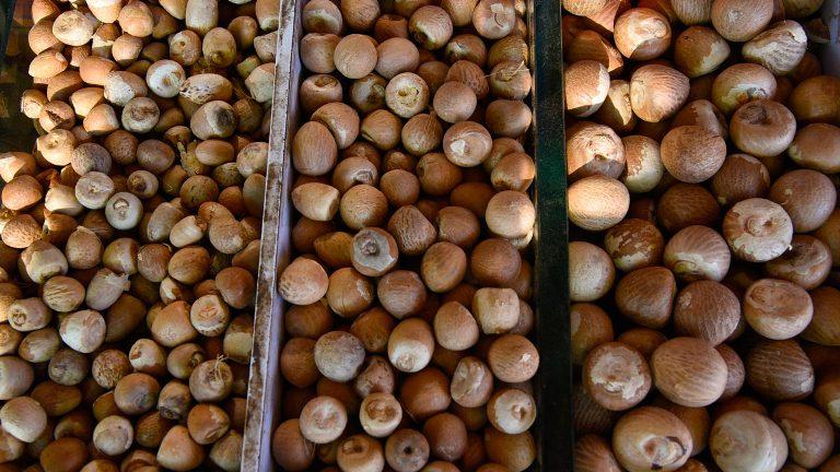 सुपारी खाने के फायदे और नुकसान Supari Khane Ke Fayde or Nuksan in Hindi