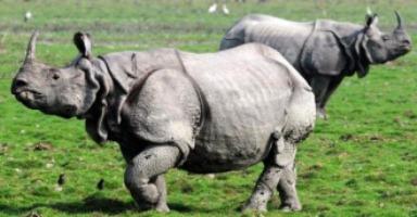 Kaziranga Wild Life Sanctuary,
