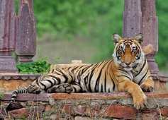 National Animal - राष्ट्रीय पशु