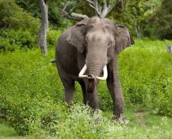 national heitage animal - राष्ट्रीय धरोहर पशु