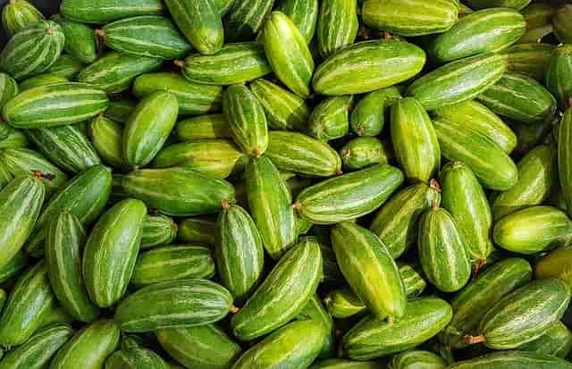 परवल खाने के फायदे और नुकसान Parval Khane Ke Fayde or Nuksan in Hindi