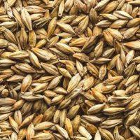 जौ खाने के फायदे और नुकसान Barley Khane Ke Fayde or Nuksan in hindi